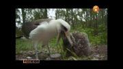 آلودگی محیط زیست و مشکلات پرندگان دریایی