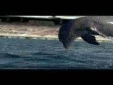 شنای هشتصد متر حیوانات