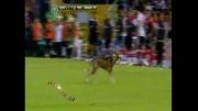 سگ وارد زمین فوتبال شد....