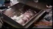 گربه و موش مواد تشكیل دهنده سوسیس(حالم بهم خورد اه اه)