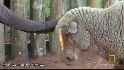 دوستی حیوانات وحشی و اهلی