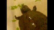 غذا خوردن لاک پشت