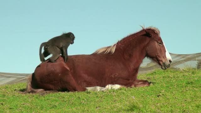 برای باهم بودن نیازی نیست مثل هم باشیم