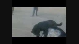 دعوای سگ ظالم