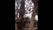 دستگیری تروریست توسط حزب الله