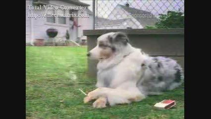 سیگار کشیدن سگ