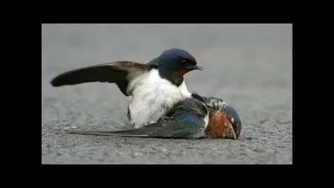 پرنده ها عاشق اکراینی میلیارد ها نفر برای انها گریه کرد