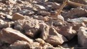 عصبانی شدن جکوی عنکبوتی در پناهگاه حیات وحش عباس آباد