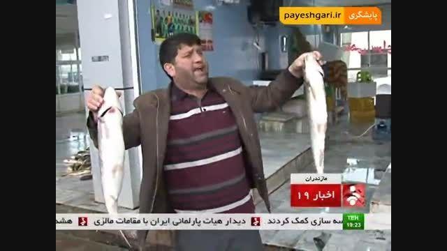 گزارش از بازار ماهی فروشان مازندران