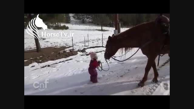 دوستی اسب و دختر بچه باهوش