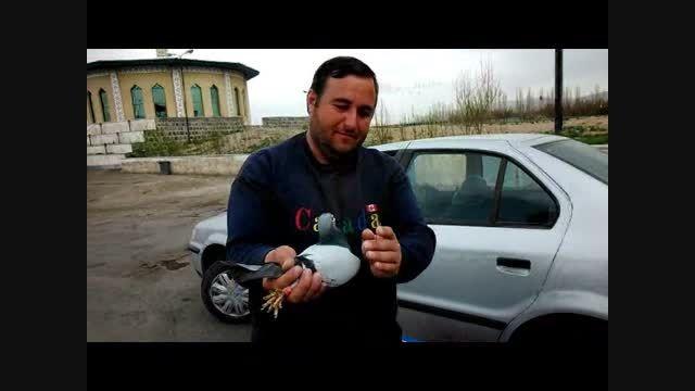 فتح زنجان برای اولین بارتوسط کلوپ کبوتران مسافتی اردبیل