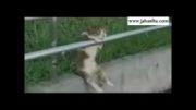 کلیپ خنده دار گربه افسرده