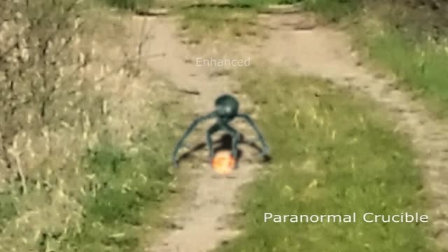 مشاهده یک حشره بیگانه در بوداپست  (مجارستان )