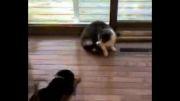 شكست سگ از گربه 5