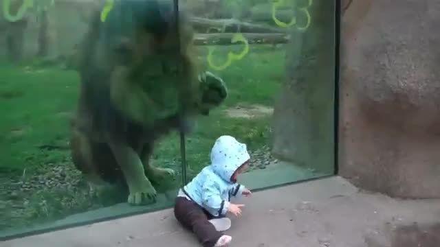 وقتی حیوانات به انسان ها حمله میکنند