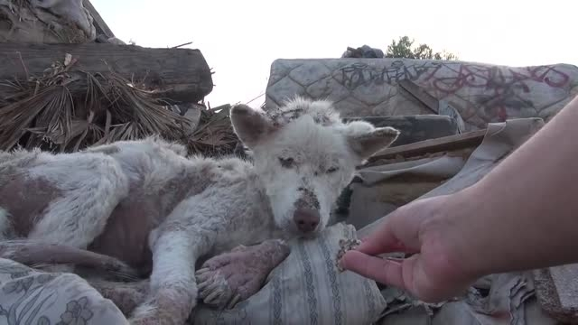 نجات شگفت انگیز سگ از مرگ حتمی....!! HD