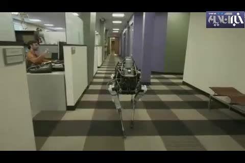 تازه ترین سگ رباتی گوگل که لگدمی خورد،ولی زمین نمی خورد