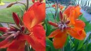 مقایسه دوربین گوشی موبایل آیفون 6 و گوشی lumia 930