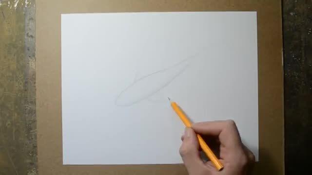 آموزش نقاشی (کشیدن ماهی)