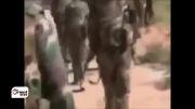 سوریه - حزب الله لبنان حمله به نیروهای نظامی به طوفان Kalamo