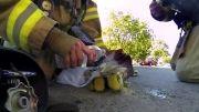 تلاش آتش نشان برای نجات بچه گربه