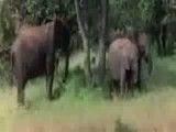 تا حالا دیدی یه حیوون مست بشه ؟
