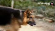 حملات سگها به انسان