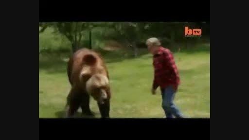 خرس هالیودی