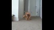 جذاب ترین سگ دنیا !!