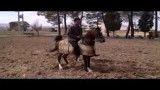 رقص اسب جمیله