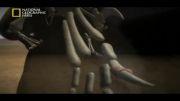 شیر ( مستند شکارچیان ) 1