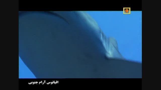 مستند اقیانوس ارام جنوبی - اقیانوس آتشفشان