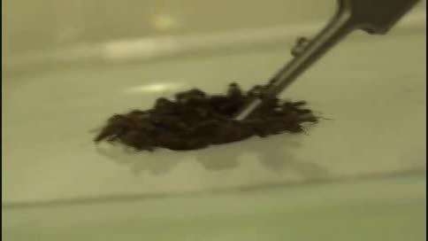 قایق نجات مورچه ها