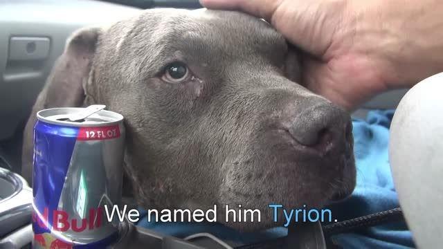 نجات سگ قبل از مرگ و زخم وحشتناک...! HD