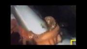 هشت پایی که کوسه را بلعید...! + فیلم