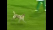 سگ بازیگوش مسابقه فوتبال را به هم ریخت!