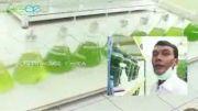 تکنولوژی استفاده از جلبک ها؛ راه حلی برای نجات جهان!
