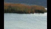 دریاچه زریبای زریوار و نیزارهای بلند و نا زیبای آن