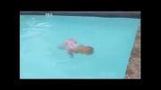شنای نوزاد 13 ماهه تو استخر 3 متری!!!