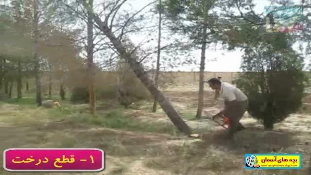 قطع و نابودی درختان مدرسه شهید منتظری سفیدشهر
