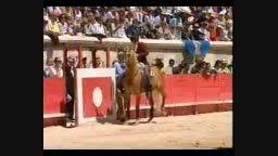 گاوبازی (اسکل کردن گاو با اسب)