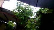 باران بهاری ....