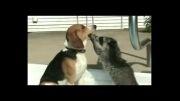 محبت حیوانات