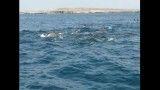 شنای دلفینها، جزیره هنگام