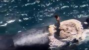 موج سواری بر لاشه نهنگ!
