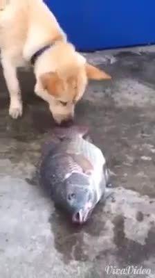 تلاش سگ برای زنده کردن ماهی ها