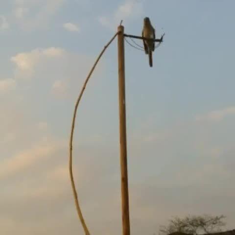 روش جالب برای گرفتن پرنده