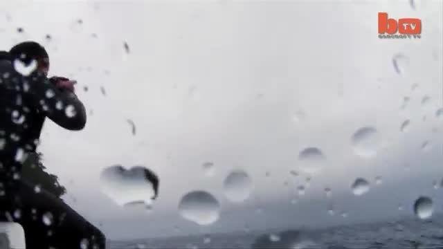 نبرد نهنگ قاتل و کوسه سفید 1
