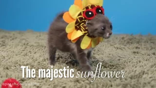 بچه گربه ها سعی کنید به پوشیدن کلاه کوچک