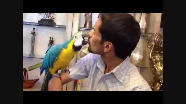 اولین رابطه جنسی بین طوطی و انسان